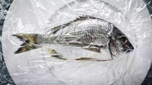 Riba s najviše sadržaja žive