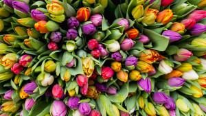 Uljepšavajuća svojstva cvijeća