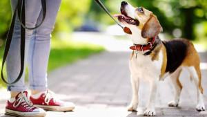 Duplo više kretanja: Vlasnici pasa su mnogo aktivniji od onih koji nemaju kućnog ljubimca