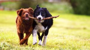 Nauka potvrdila: Igranje s mačkama i psima je izvrsno za smanjenje stresa