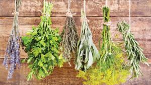 Biljke koje vam prirodno poboljšavaju pamćenje