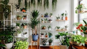 Biljke koje čiste zrak od zagađenja i toksina
