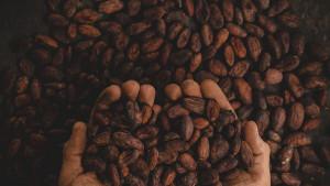 8 razloga zašto trebate jesti kakao svaki dan