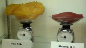 Kilogram sala ili kilogram mišića - Šta je veće?