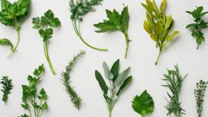 Impresivne biljke koje imaju antivirusna dejstva