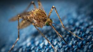 Evo zašto vas komarci ujedaju više nego ostale