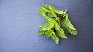 Nevjerovatno moćna biljka koja nudi rješenje za mnoge zdravstvene tegobe