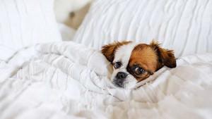 Smanjena anksioznost i bolje raspoloženje: Kako vam vaš pas uljepšava život?