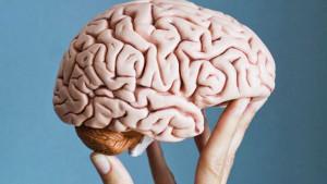 Kako održati mozak mladim?