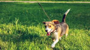 Šetnja sa psom je izuzetno korisna aktivnost za vas