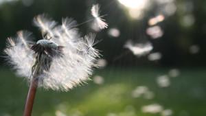 Alergija na polen: kako ublažiti simptome?