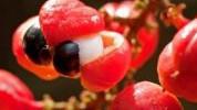 Guarana - Biljka za vitko tijelo i energiju