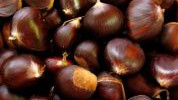 Kesten: Jedino orašasto voće bogato vitaminom C