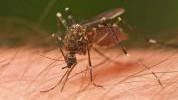 Kako zaustaviti svrab nakon ugriza komarca?