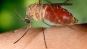 Uradi sam/a: Domaći sprej protiv komaraca