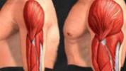 Veći mišići sagorijevaju više kalorija