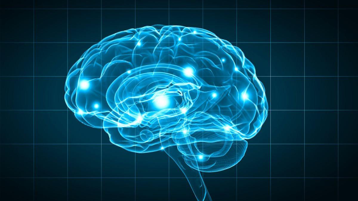 Kako gojaznost utječe na mozak