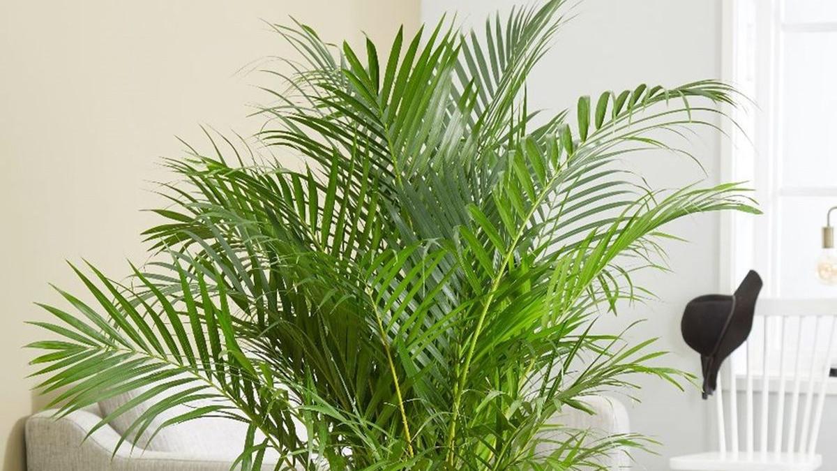 Najbolje biljke za zdrav zrak u vašem domu