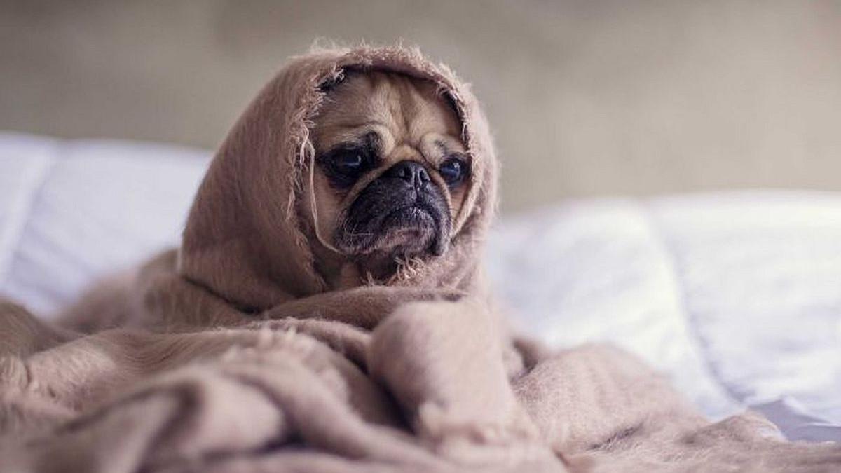 Vaš pas može osjetiti vaš stres