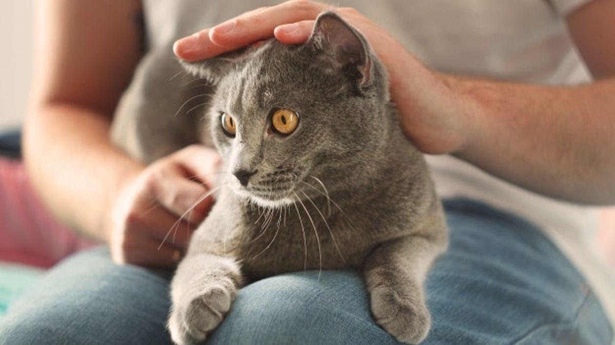 Vlasnici mačaka imaju smanjen rizik od kardiovaskularnih oboljenja
