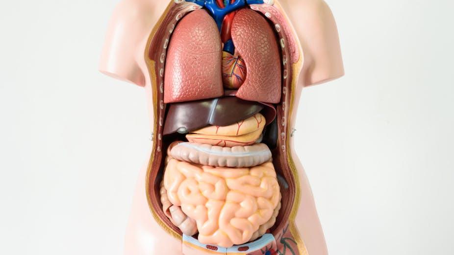 Organi bez kojih je moguće živjeti