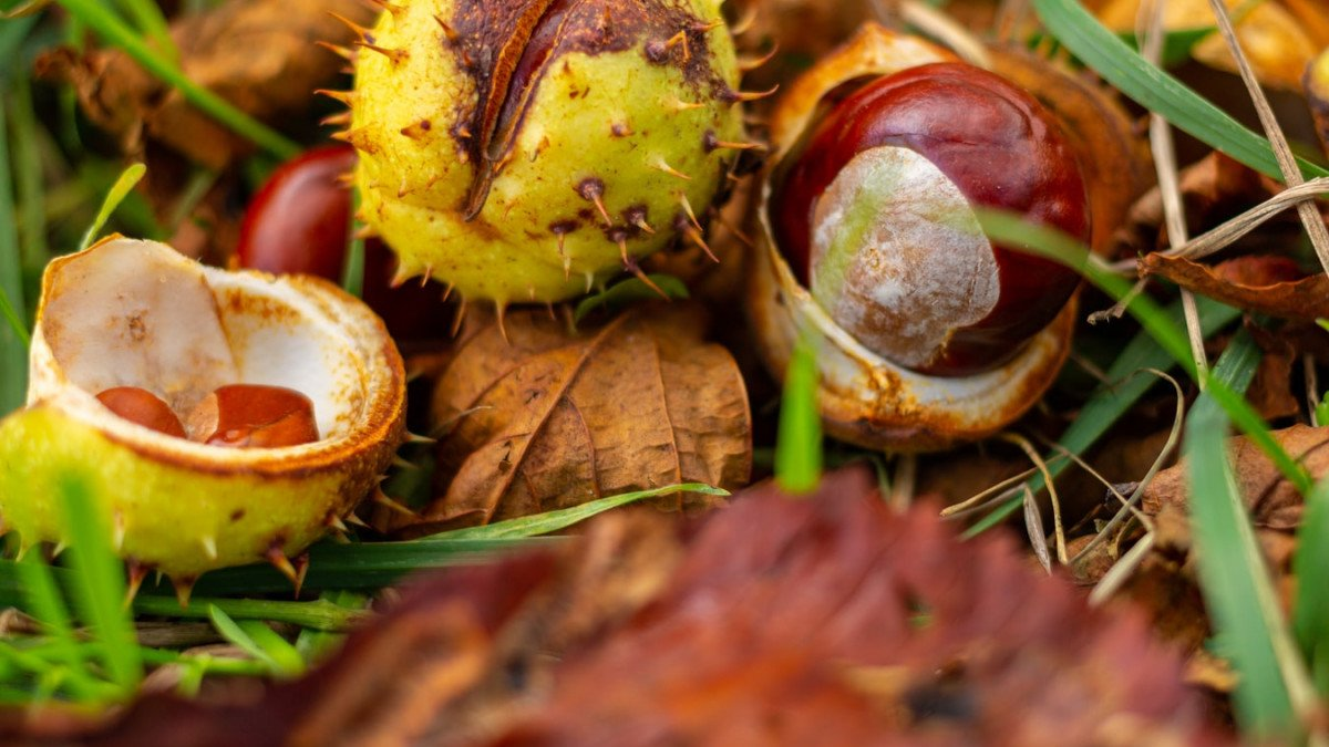 Iskoristite sezonu kestena: 5 razloga zašto treba jesti ovaj orašasti plod