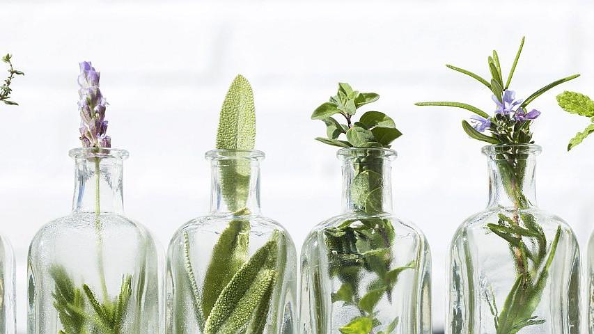 Prirodno blago: Pet biljaka za kućno liječenje
