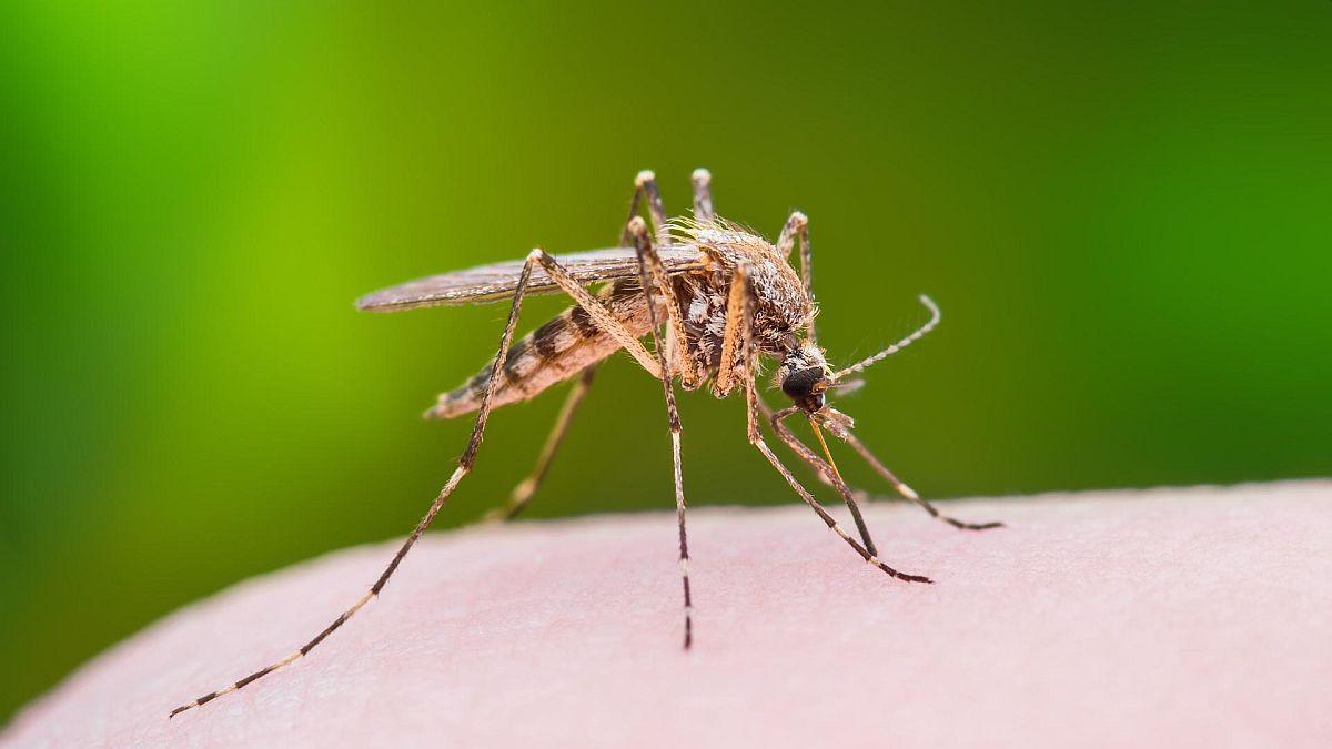 Priroda krije najbolju zaštitu od komaraca