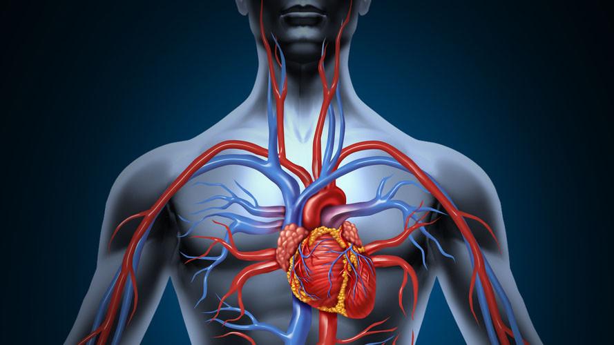 Kako poboljšati cirkulaciju krvi u tijelu?