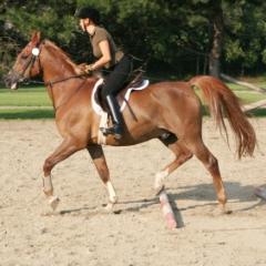 Jahanje konja - koristi po zdravlje i tijelo