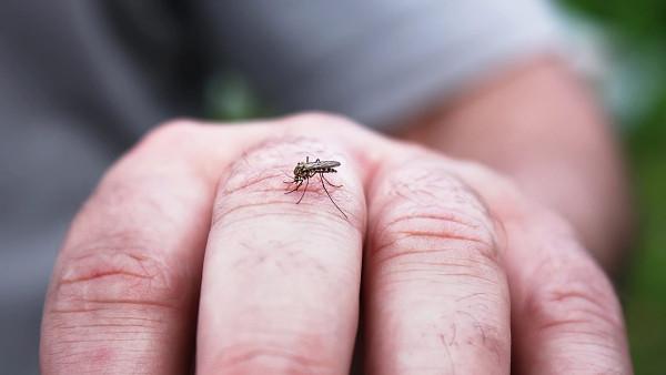 Istraživanja pokazala: Komarci ne mogu prenositi COVID-19