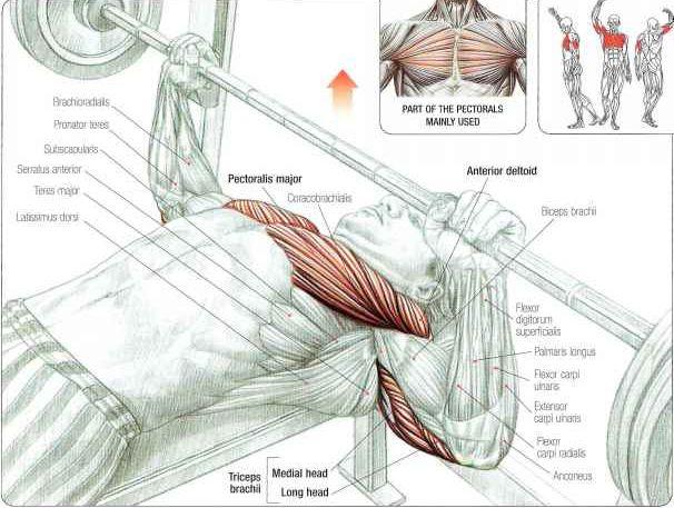 Bench potisak i beneficije najpoznatije vježbe s tegovima